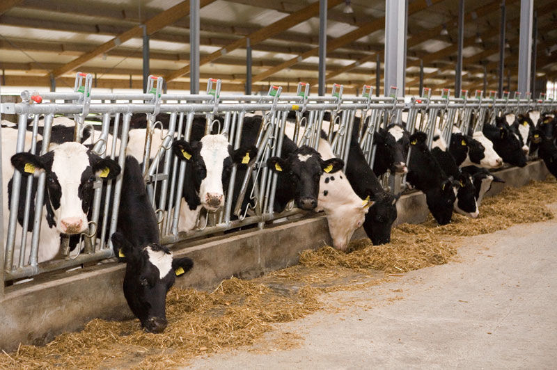Фото - Бизнес план молочной товарной фермы