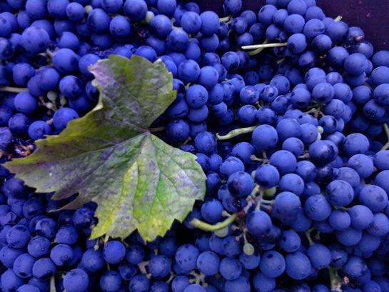 Фото 4 - Сок натуральный виноградный без воды и сахара.Возможна доставка.