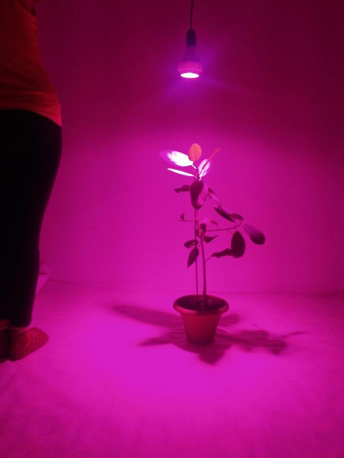 Фото 6 - Фитолампа для растений Cree - 70Вт