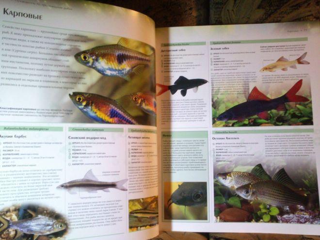 Фото 7 - Энциклопедия аквариумных и прудовых рыбок