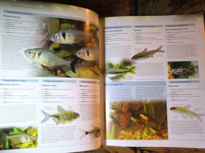 Фото 8 - Энциклопедия аквариумных и прудовых рыбок