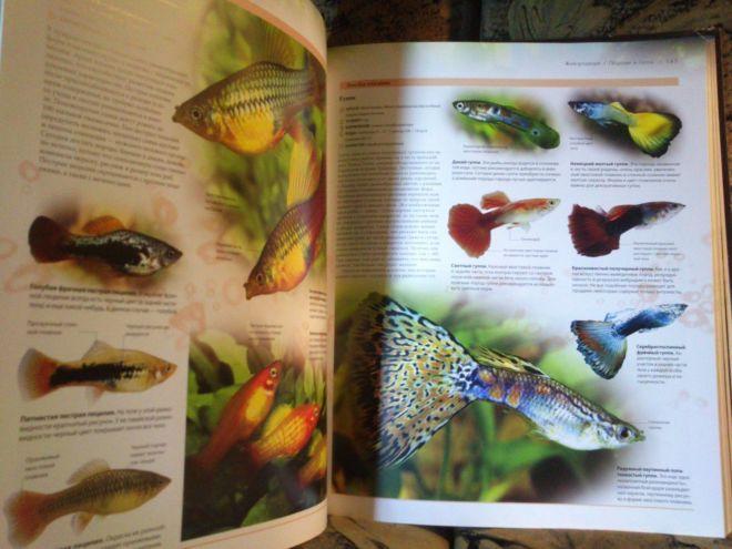 Фото 9 - Энциклопедия аквариумных и прудовых рыбок