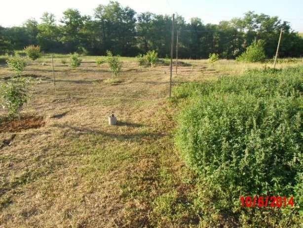 Фото - покос травы, уборка участка, культивация, демонтаж, спил деревьев