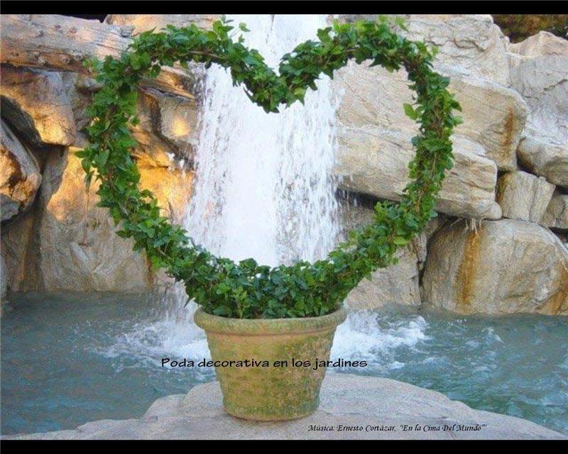 Фото 6 - Плющ садовый