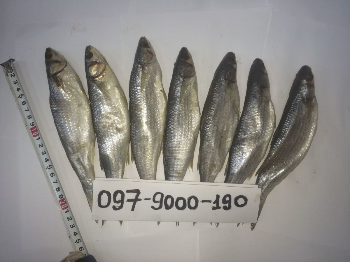 журавка рыба фото