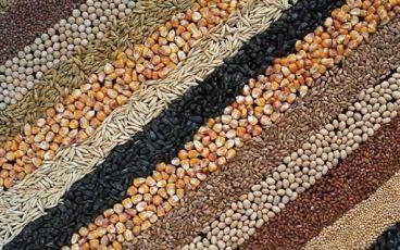 Куплю сою, овес, горох, соняшник, пшеницю, ячмінь