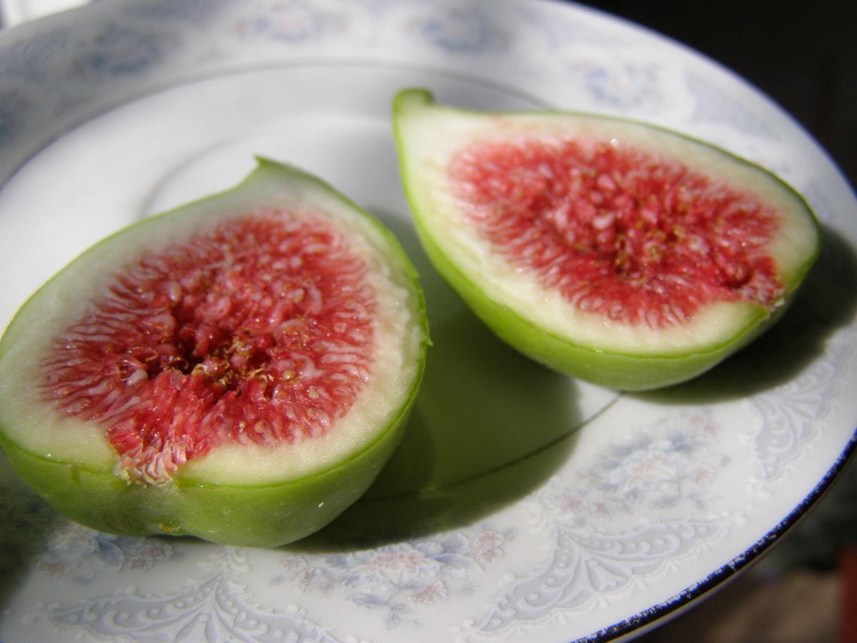 Фото 4 - Инжир плодоносящий