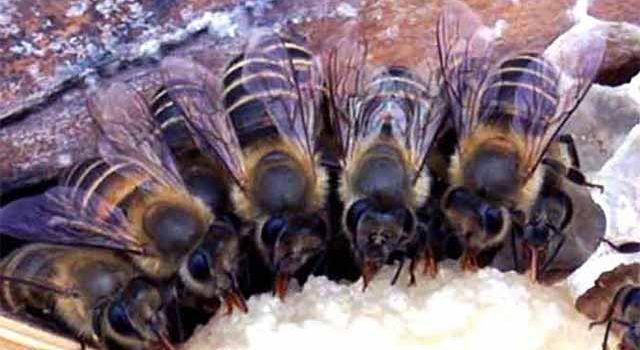 Соевая мука для весенней подкормки пчел