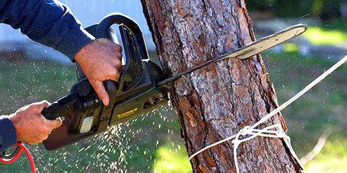 Спилю деревья,отдельные стволы и ветки