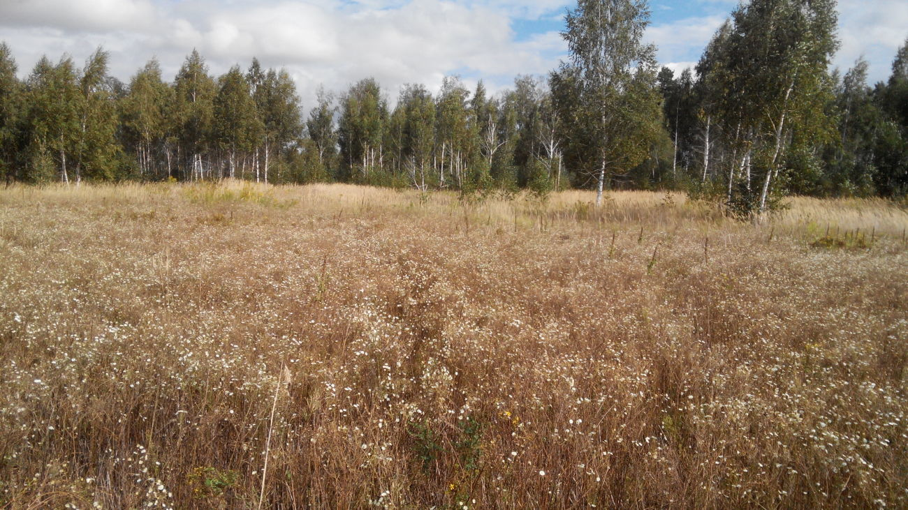 Продам земельный участок в Киевской области, село Заворичи