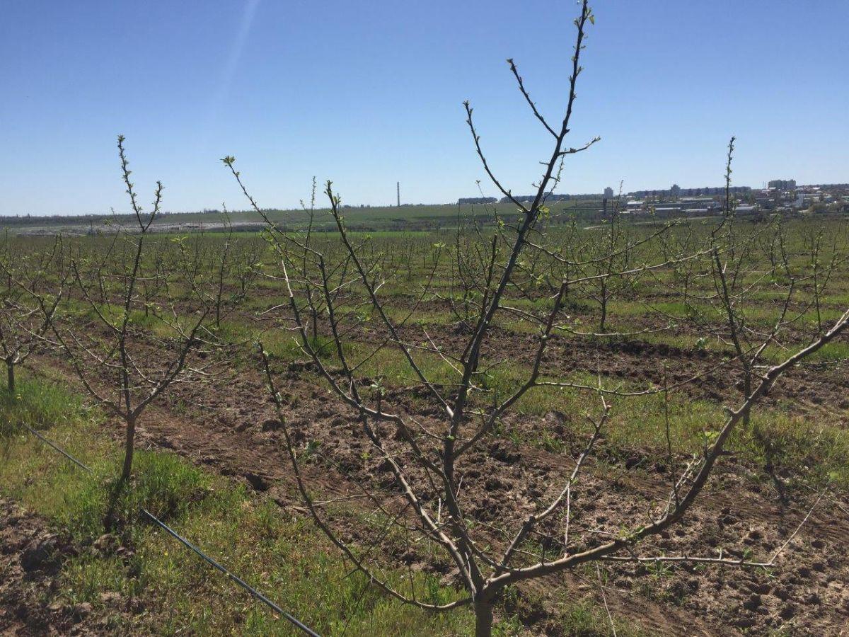 Фото - Яблочный сад 32 Га в г. Херсон