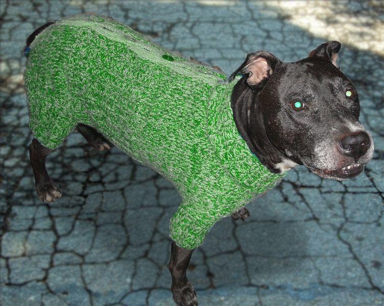купить сейчас вязаная одежда для собак и котов 100 грн одежда