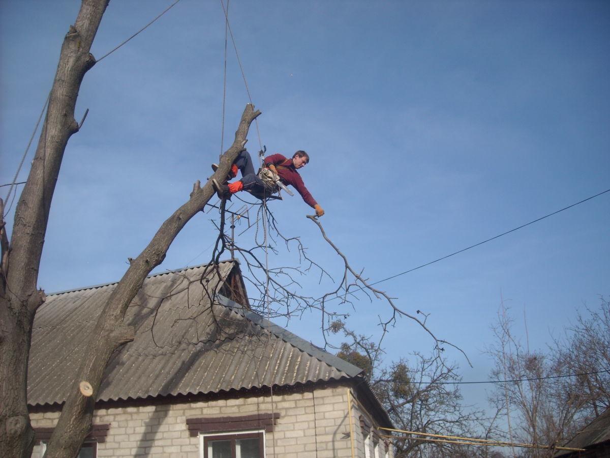 Спил деревьев профи альпинистами. Вышка своя 30 м. Дробилка веток МТЗ.