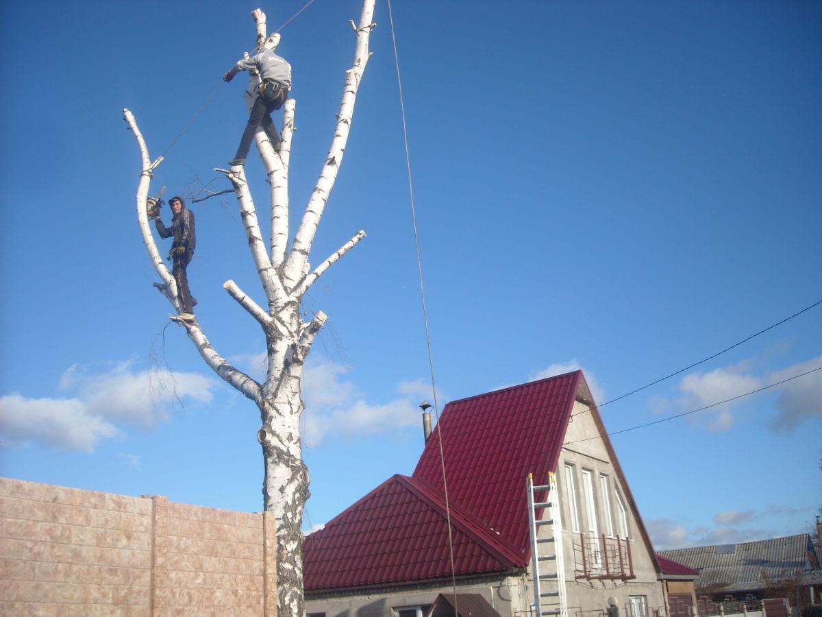 Спил  дерева альпинистами, с Вышки! Дробилка веток  и Вышка в наличии.