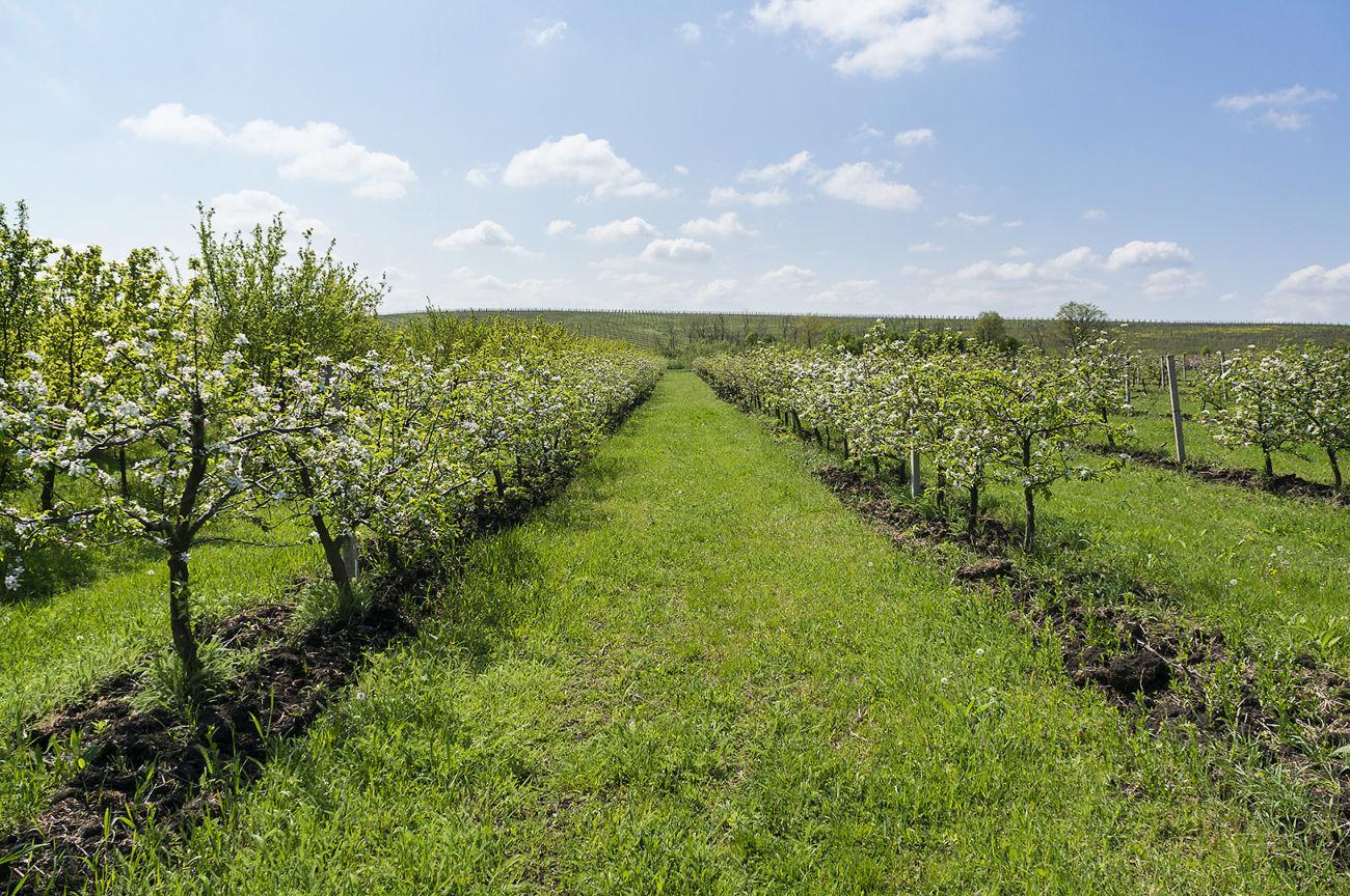 Земельный участок осг, садоводство. От 2 до 100 га