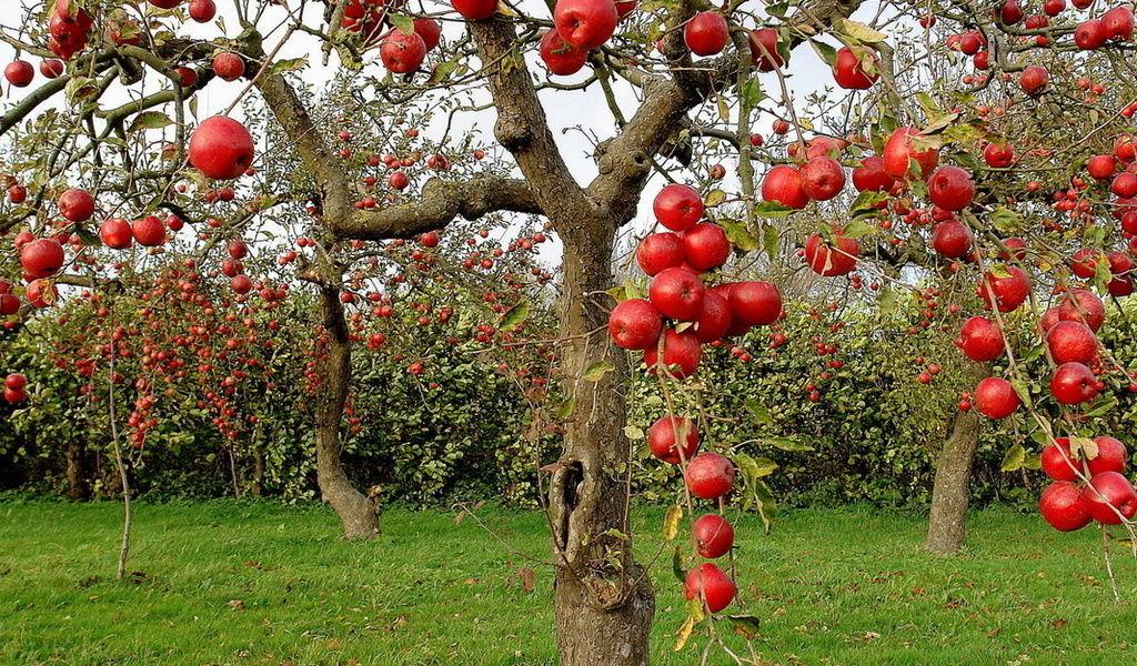 Обрезка деревьев. Сезонный уход за садом