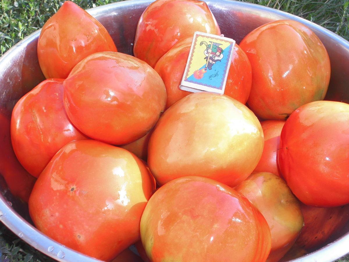 Семена томатов,огуцов,перцев,бакл.,цветов,арахиса,,фасоли,нута,пряных