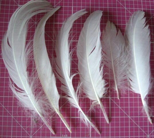перо диких птиц тёмное большое, 20, 30 см, лебедь белое, на декор