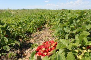 Работа в сельском хозяйстве в Польше
