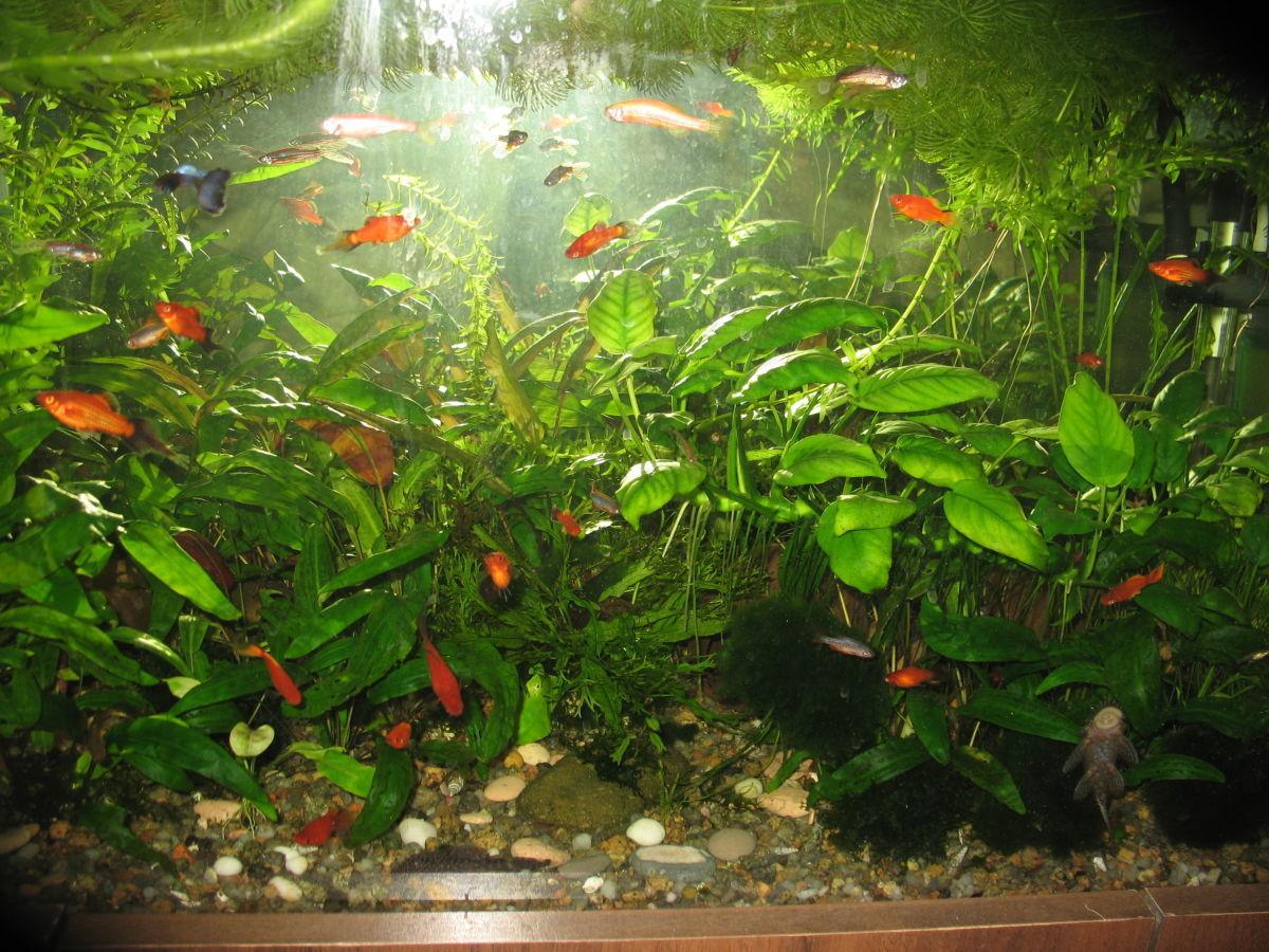 Продам аквариумные рыбки, креветки, растения