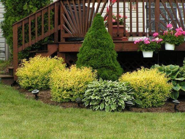 Ландшафтний дизайн / Догляд за садом / Газони/ Ландшафтный дизайн