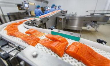 Робота ! Потрібно 10 жінок для філеювання лосося на завод у Польщу.