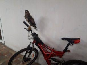 Горный велосипед Azimut Vision B+ 26