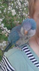 Помогите вернуть попугая калита монах