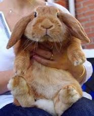 Декоративные кролики Аренда
