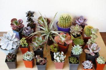 Суккуленты, композиции флорариум, бонсайные деревья, эхеверия, кактус