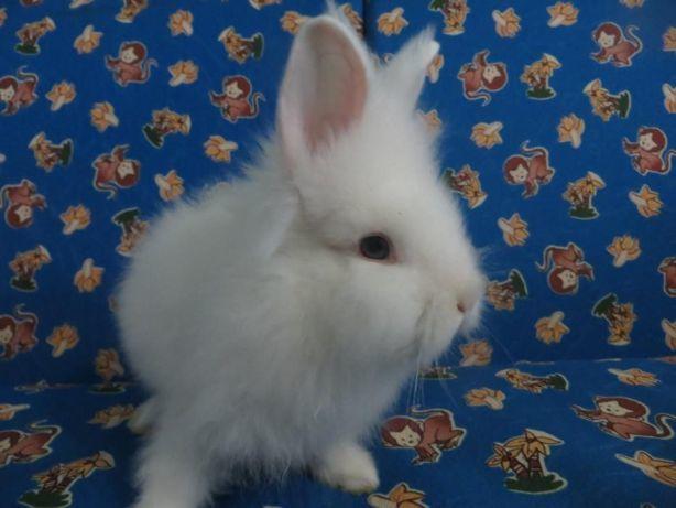 Кролики для фотосессии сызрань фото