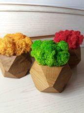 Стабілізований мох, скандинавський мох, стабилизированный мох, декор
