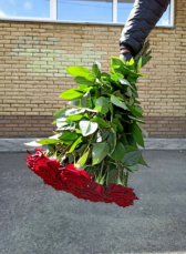 Роза домашняя. Ежедневный срез! Цветы от производителя. ЦЕНА-КАЧЕСТВО! 3