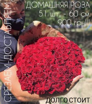 Роза домашняя. Ежедневный срез! Цветы от производителя. ЦЕНА-КАЧЕСТВО!