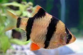 Продаю акваріуми, акваріумні рибки та рослини