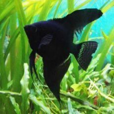 Продаю акваріуми, акваріумні рибки та рослини 3