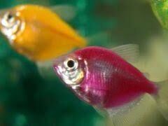 Продаю акваріуми, акваріумні рибки та рослини 2