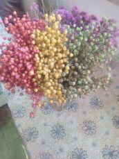 Лен Декор травы Гелехристум