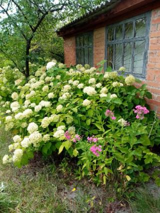 Продается дача в с. Зачепиловка Новосанжарского района Полтавской обл.