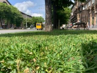 Покос травы мотокосой 2