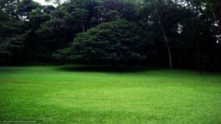 Покос травы мотокосой 4