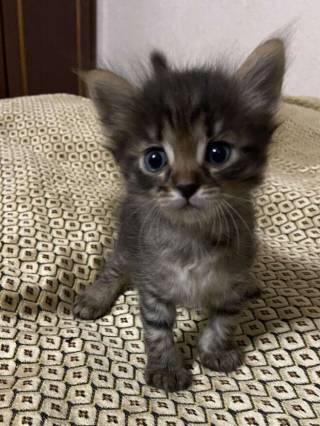 Отдам котят в заботливые руки 2