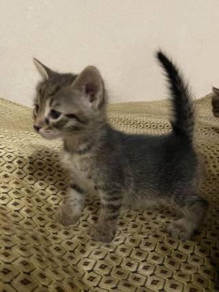 Отдам котят в заботливые руки 3