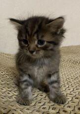 Отдам котят в заботливые руки 6