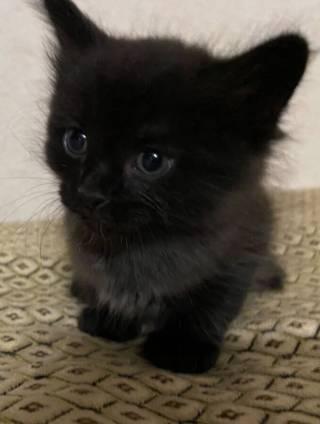 Отдам котят в заботливые руки 5