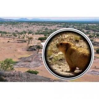 Монокуляр с треногой и клипсой Panda Vision 40×60 5