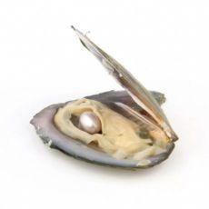 Ракушка, перлина ( ракушка с жемчугом)