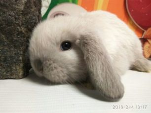 Кролики BAMBY Кривой Рог