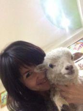 Карликовая декоративная овечка, декоративные барашки мини для дома