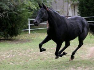 Продам коня.Продамконя#Конь#молодийжеребець# Вік7років#вага800кг#